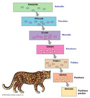 Klasifikasi Carolus Linnaeus