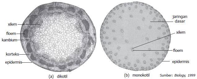 Penampang batang dikotil dan monokotil