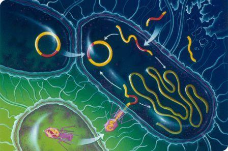 Peran Baik Bakteri Dalam Kehidupan