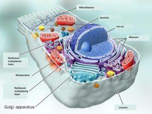 Struktur Utama sel