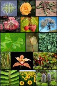 keragaman kingdom tumbuhan