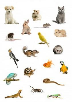 kerajaan hewan