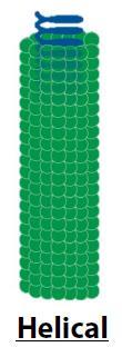 Struktur virus spiral