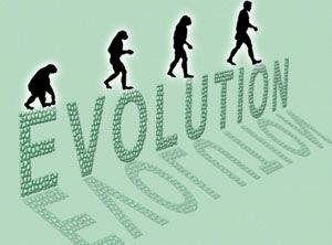 Evolusi Kera