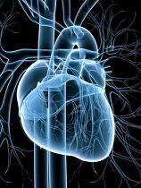 Fungsi Komponen Sistem jantung kardiovaskular