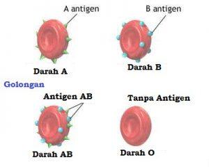 Antigen dalam Darah