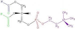 Fosfatidil-Kolin