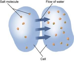 Pengaturan Keseimbangan Air dalam sel dan organisme