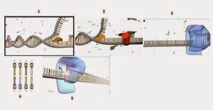 Replikasi DNA Sel