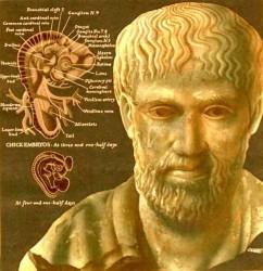Sistem Klasifikasi Makhluk Hidup Aristoteles