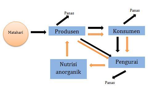 Pengertian aliran energi dalam ekosistem sridianti aliran energi ccuart Gallery