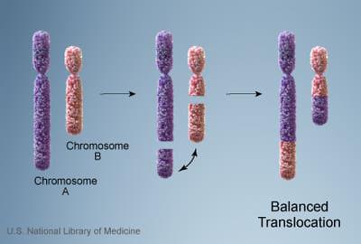 Macam-macam Mutasi Kromosom