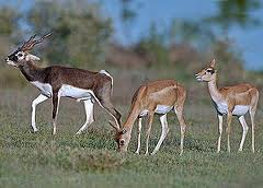 Hewan Herbivora: Contoh Habitat Pola Makan