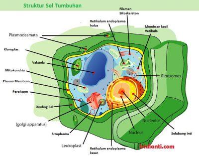 organel sel tumbuhan