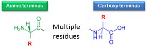ujung c dan n protein