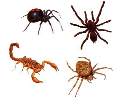 Ciri-ciri Arthropoda
