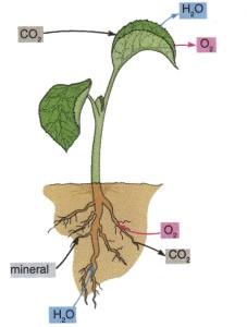 Faktor Pertumbuhan Tumbuhan Internal Eksternal