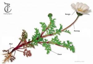 Fungsi Bagian dan Jenis Tumbuhan