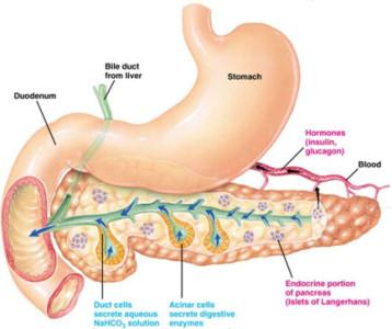 Hormon Pankreas