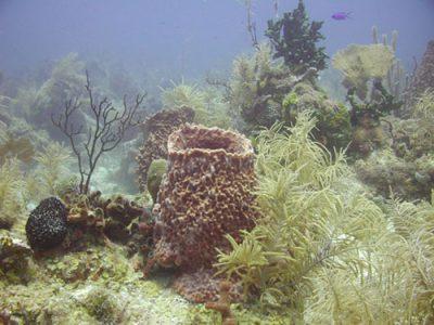 Peranan Porifera dalam Kehidupan Manusia