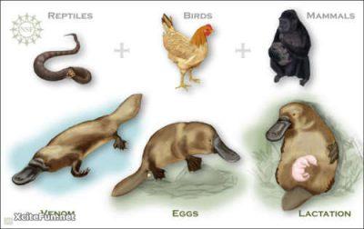 Perbedaan Mamalia dan Reptil