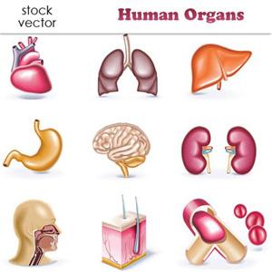 Sistem Organ Tubuh Manusia