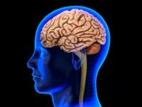 29 Organ Tubuh Manusia Dan Fungsinya Berikut Ini Biologi Sridianti Com