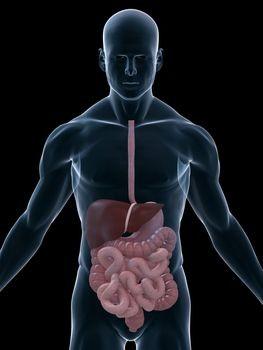 Gangguan Penyakit Sistem Pencernaan Manusia