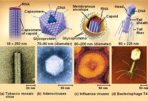 Perbedaan Virus RNA dan DNA