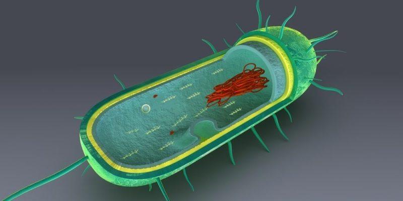 Struktur Sel Prokariotik Dan Eukariotik Biologi Sridianti Com