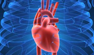 Fungsi Jantung Manusia