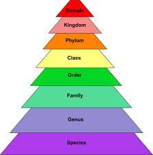 Pengertian Klasifikasi ilmiah