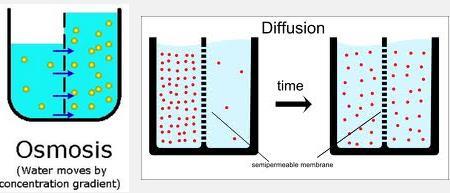 Perbedaan Antara osmosis dan difusi