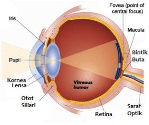 bagian-bagian mata