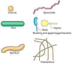 Mengenal Berbagai Jenis Bakteri
