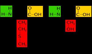 struktur serin dan metonin