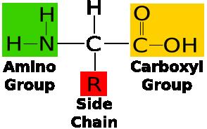 struktur umum asam amino