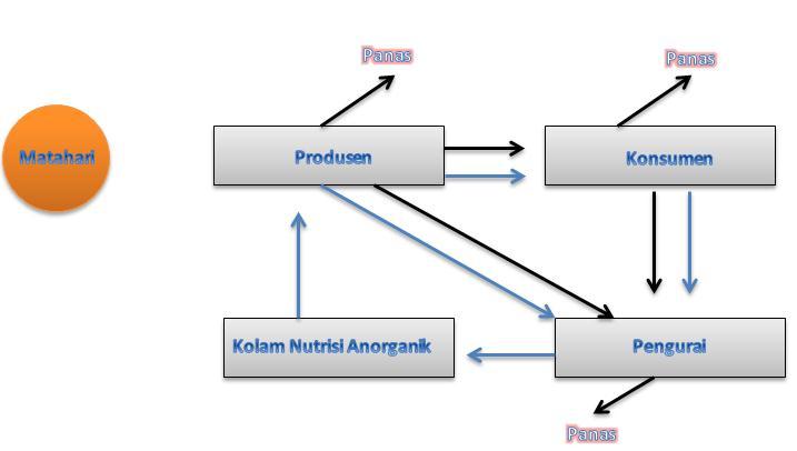 Komponen aliran energi dalam ekosistem aliran energi dalam ekosistem diagram ccuart Image collections