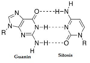 guanin sitosin