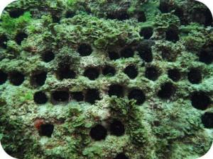 Peranan Echinodermata