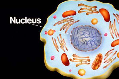 Nukleus