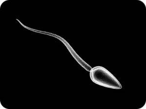 Sperma Manusia
