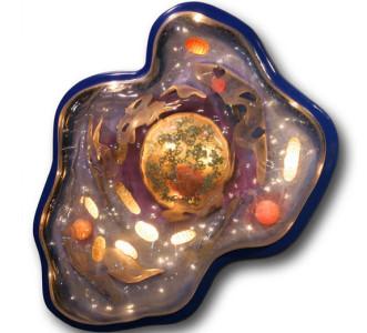 Struktur Nukleus - Inti sel
