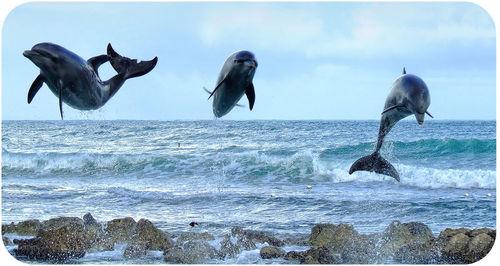 mamalia lumba-lumba