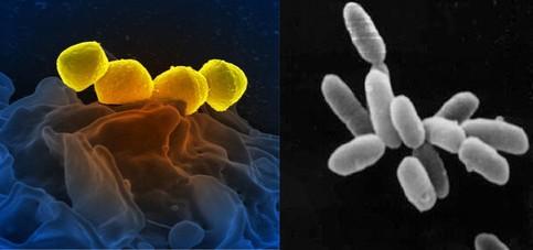 bakteri dan archae