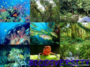 Pengertian Keanekaragaman hayati