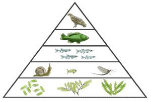 Pengertian Piramida energi