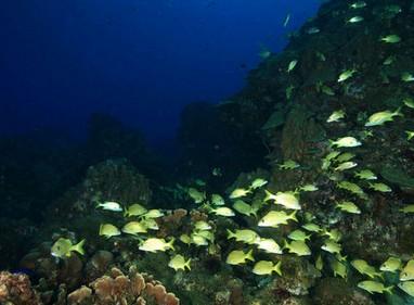 kelompok ikan