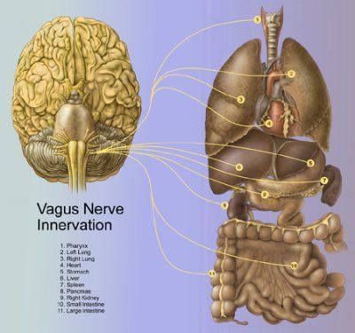 Gangguan saraf Vagus