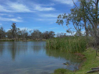 Ciri-ciri Ekosistem air tawar